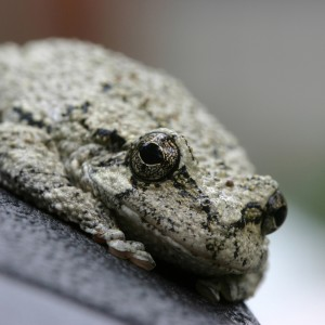 frog-waiting-for-a-letter-from-1555526-1279x852